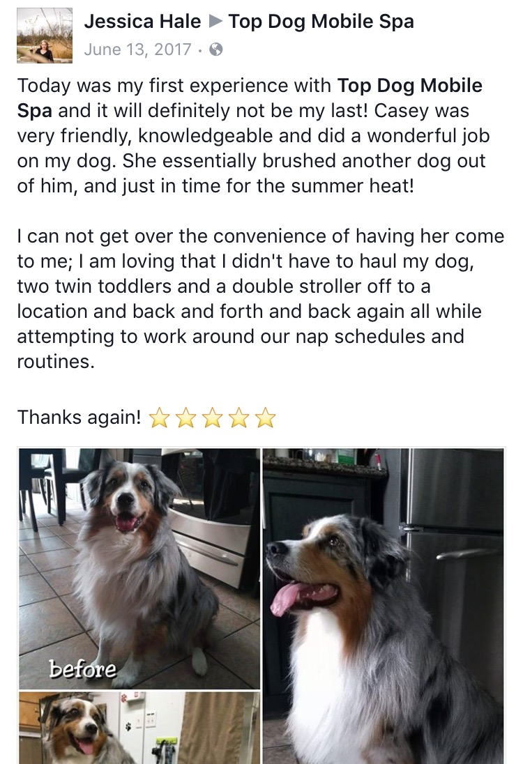 Top dog mobile spa serving london ontario area top dog mobile spa really has the best customers check out some paws itive feedback about londons premier mobile grooming service solutioingenieria Image collections