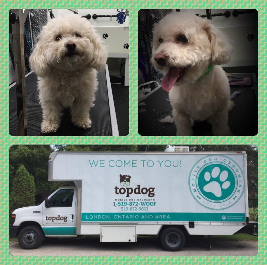 Top dog mobile spa serving london ontario area httpsmfacebooktopdogmobilespa solutioingenieria Image collections